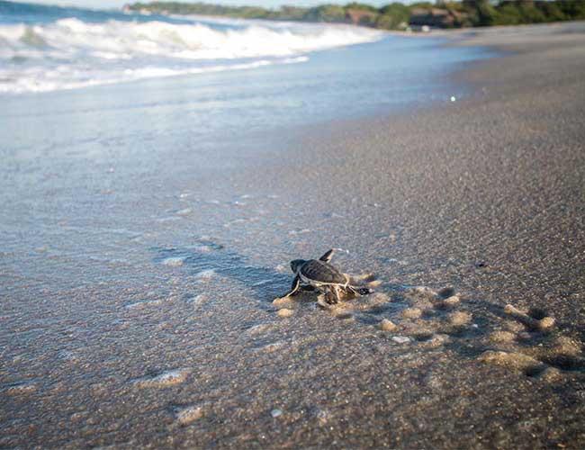 Cuidado y conservación de las tortugas