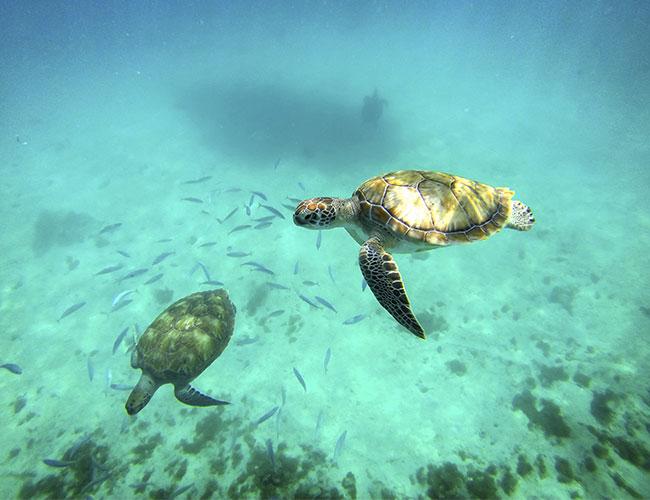 Conservacion de las tortugas