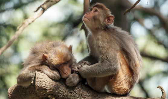 Cuidado y rescate de animales en la India