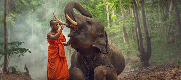 Mahuts cuidando a un elefante en India