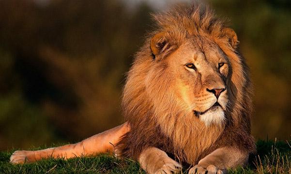 Fauna de Sudáfrica